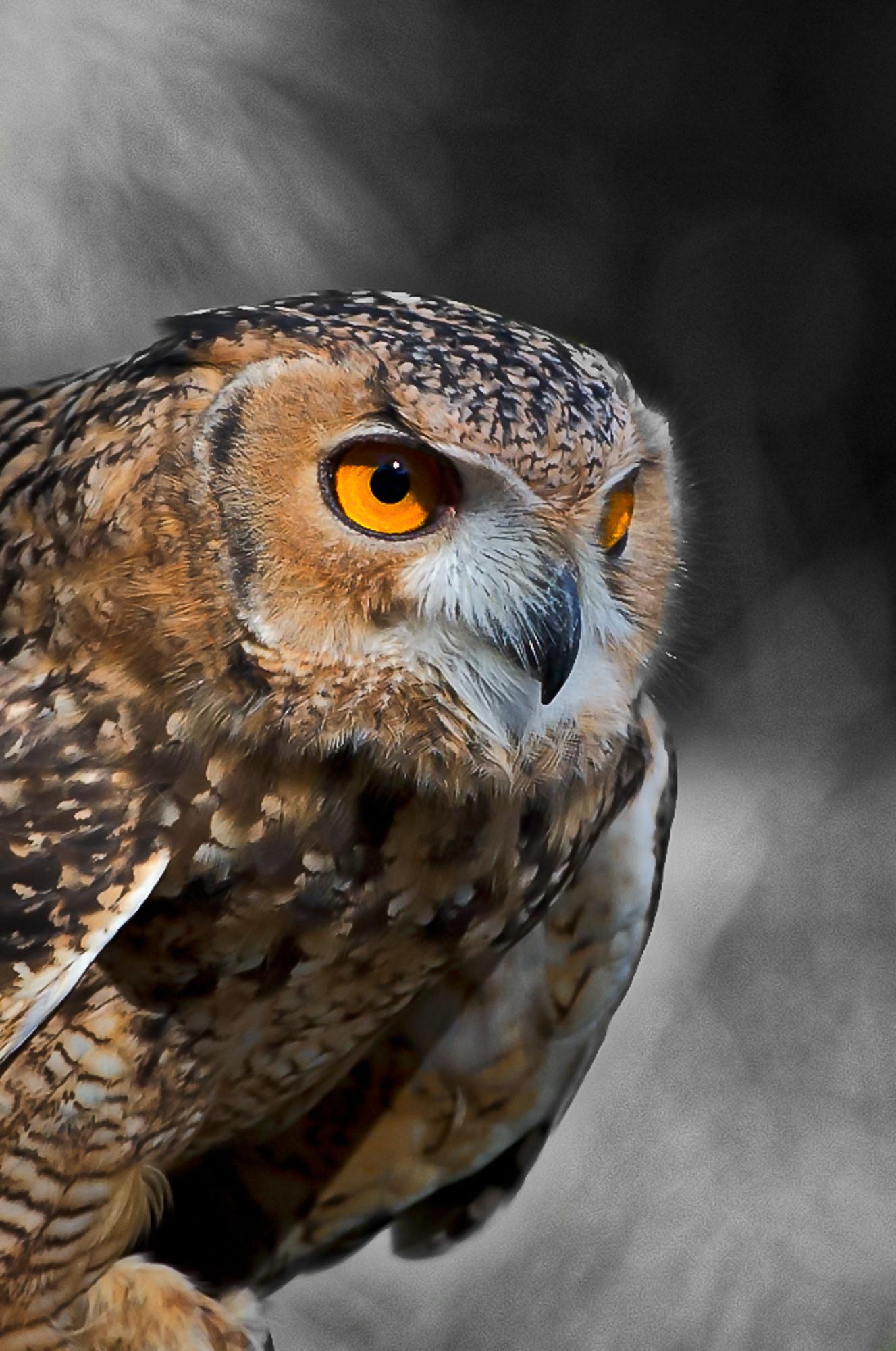 2014-10-18_Birds_Booker_0762.jpg