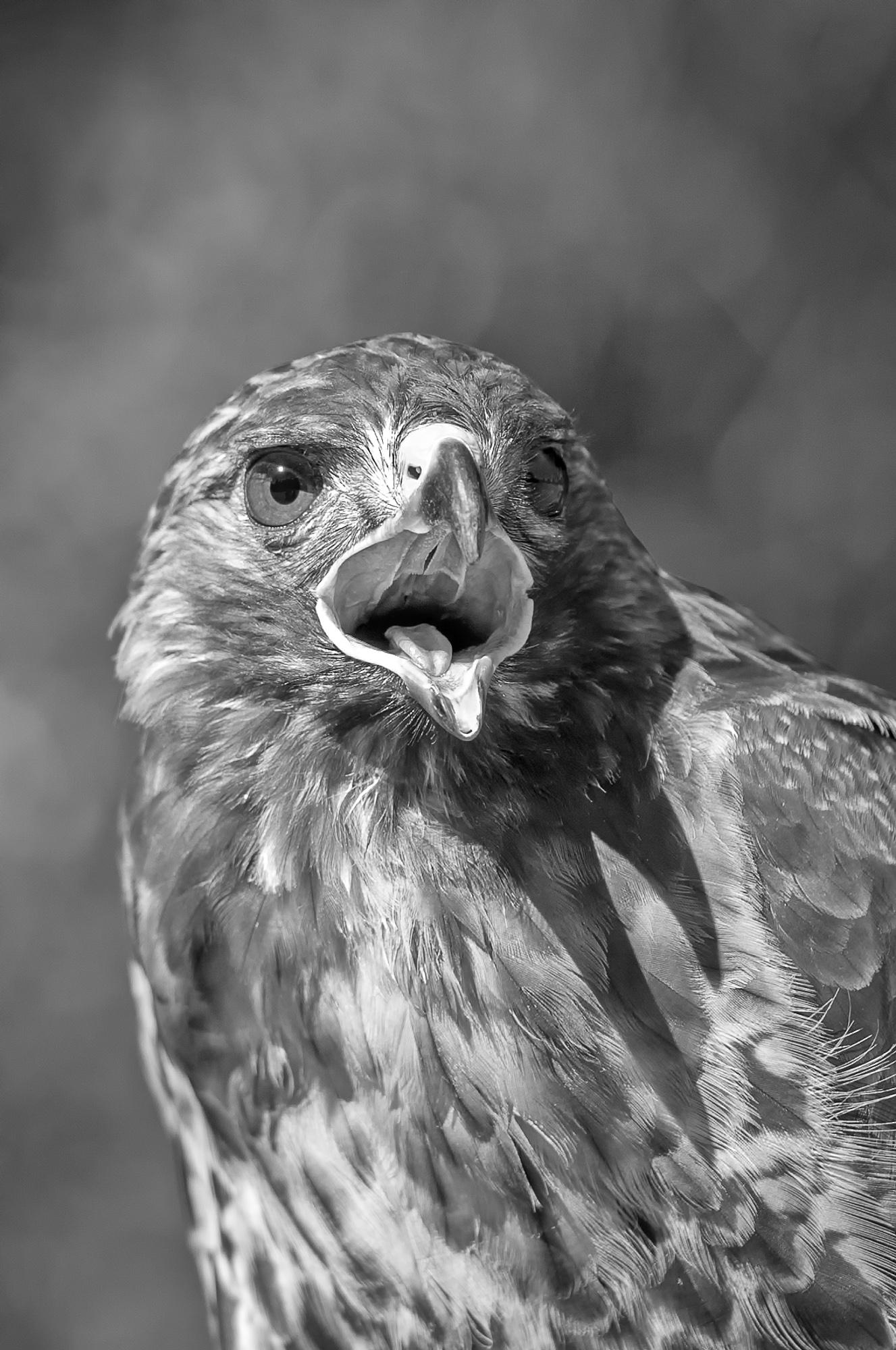 2014-10-18_Birds_Booker_0041-Edit-Edit-Edit-2-Edit.jpg