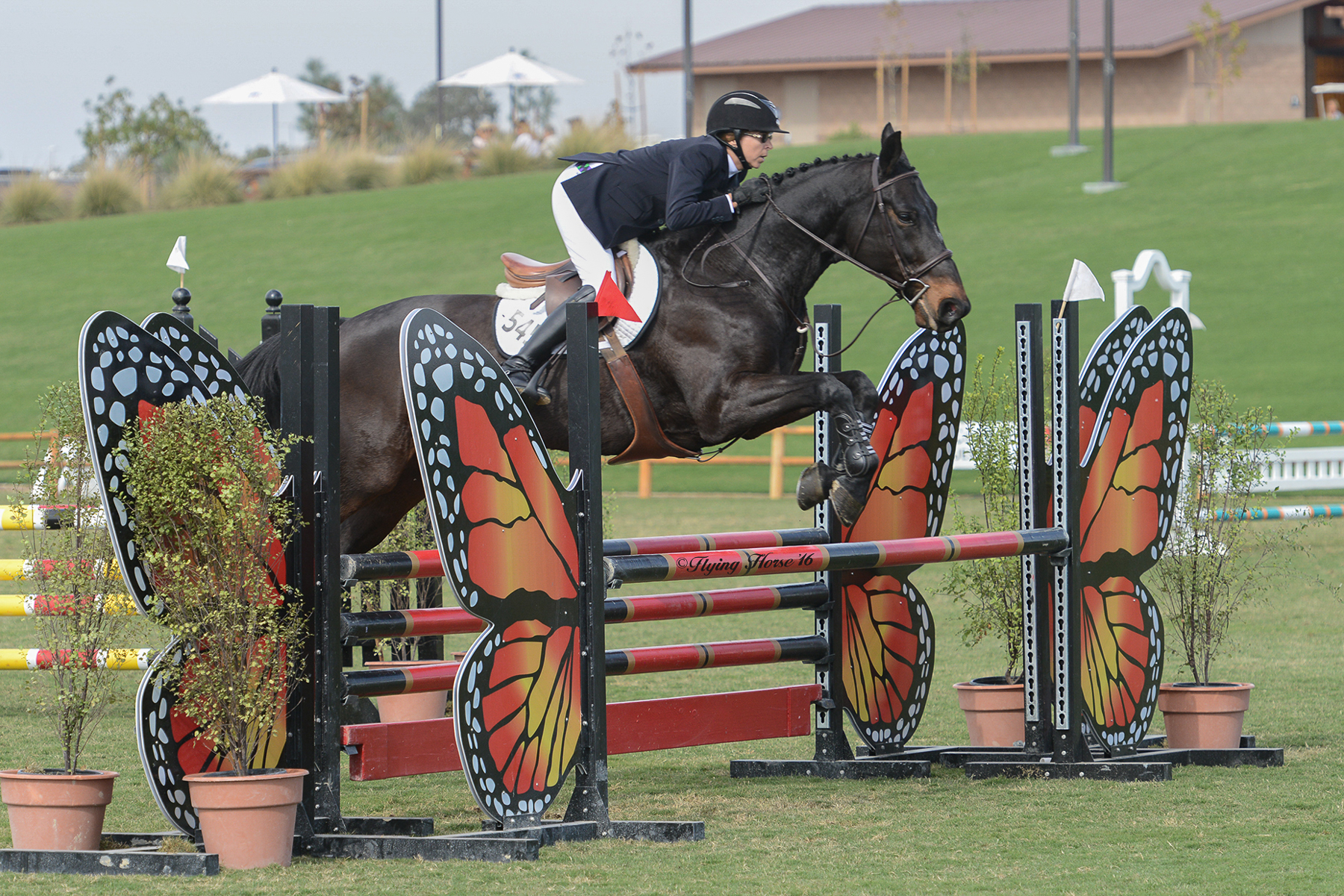 Dardam Q at the Central California Classic Horse Show in Paso Robles.