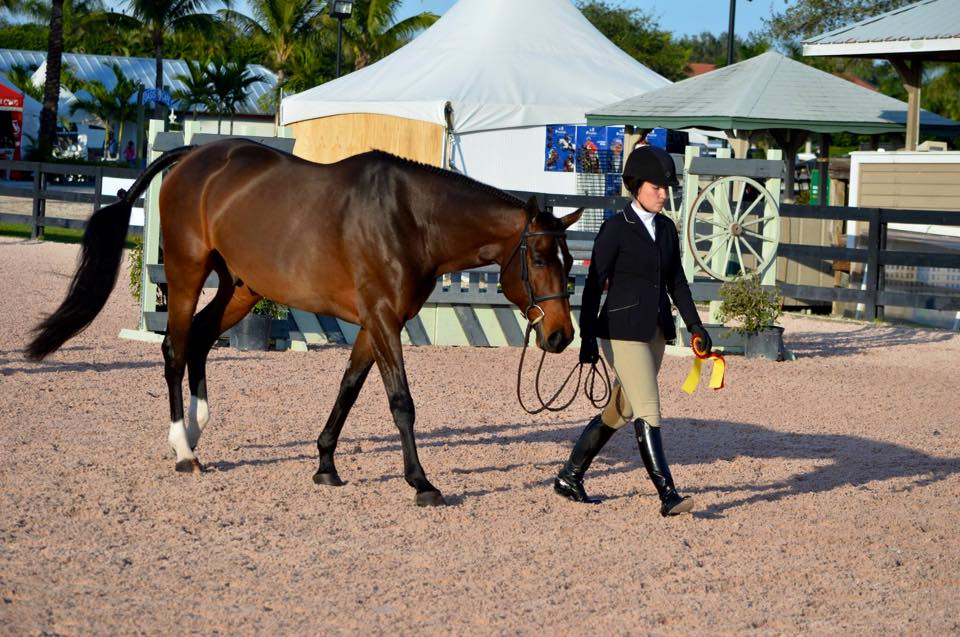 """Laura Critz and Quatrain picked up an impressive second place in the Junior Hunter 3'3"""" Handy"""