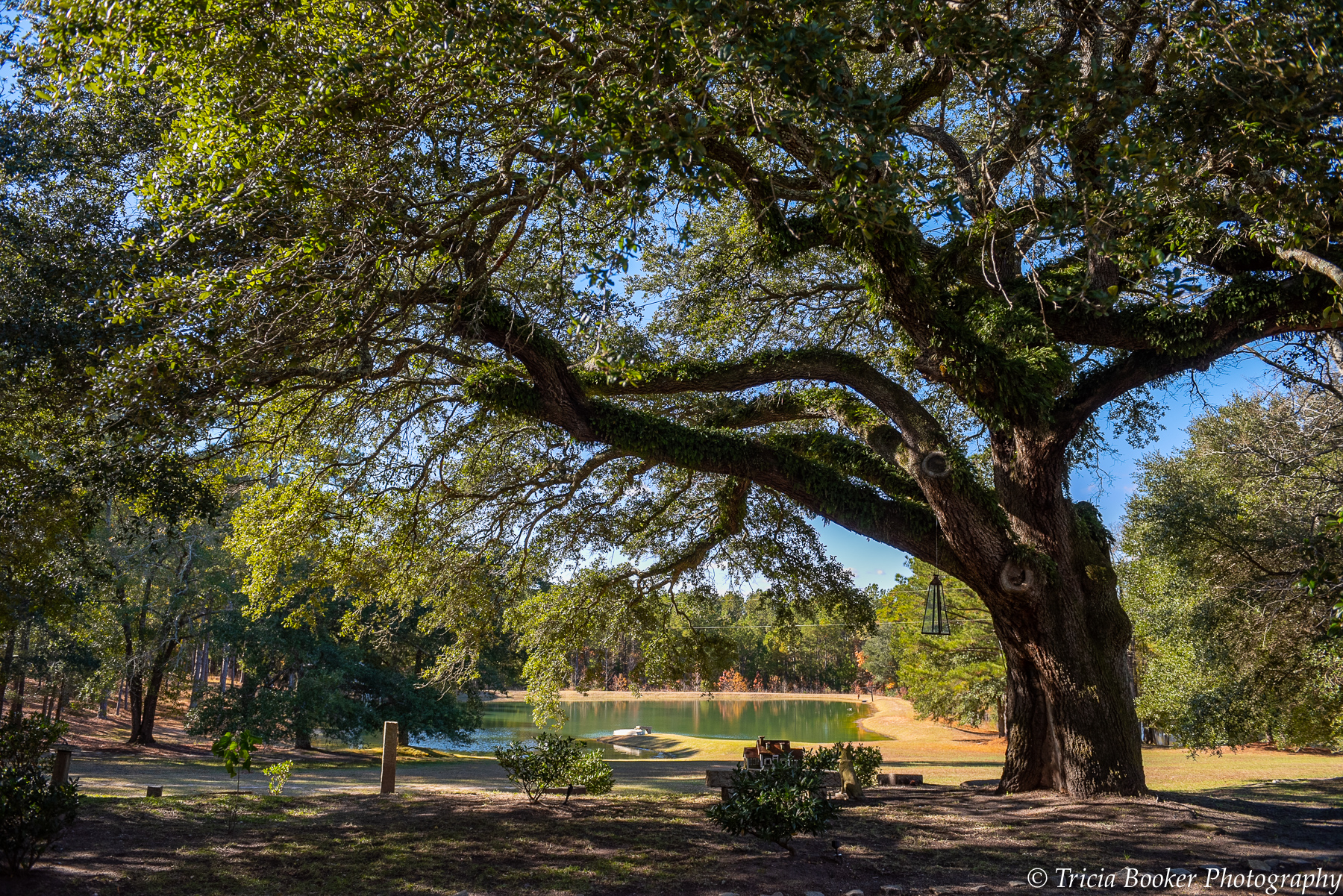 Lakeside at Pleasant Oaks Plantation