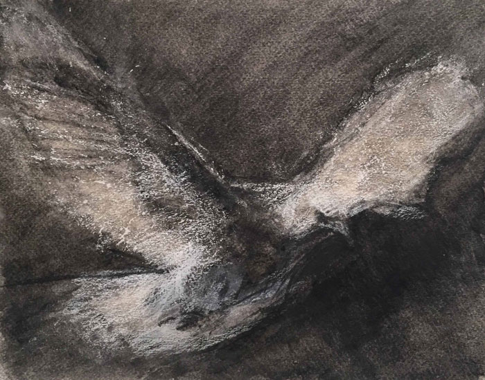 Dove in Flight, Charcoal, chalk on paper, 11 x 14, 2016