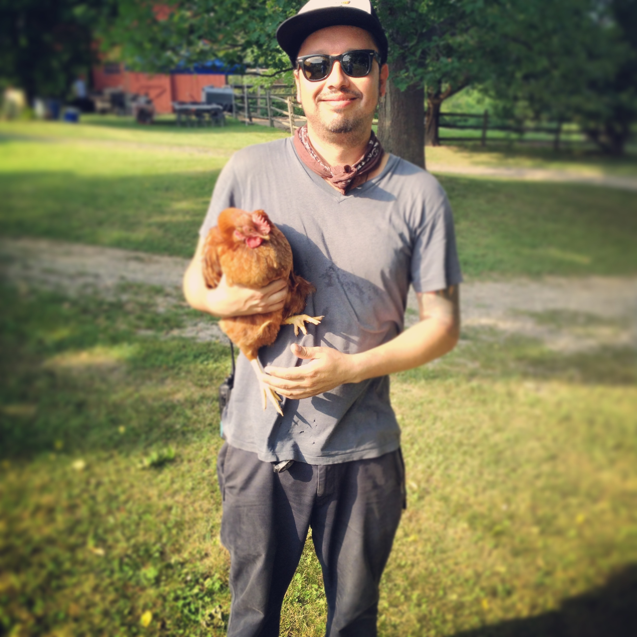 chicken on location county fair productions home photo and video environmentally conscious