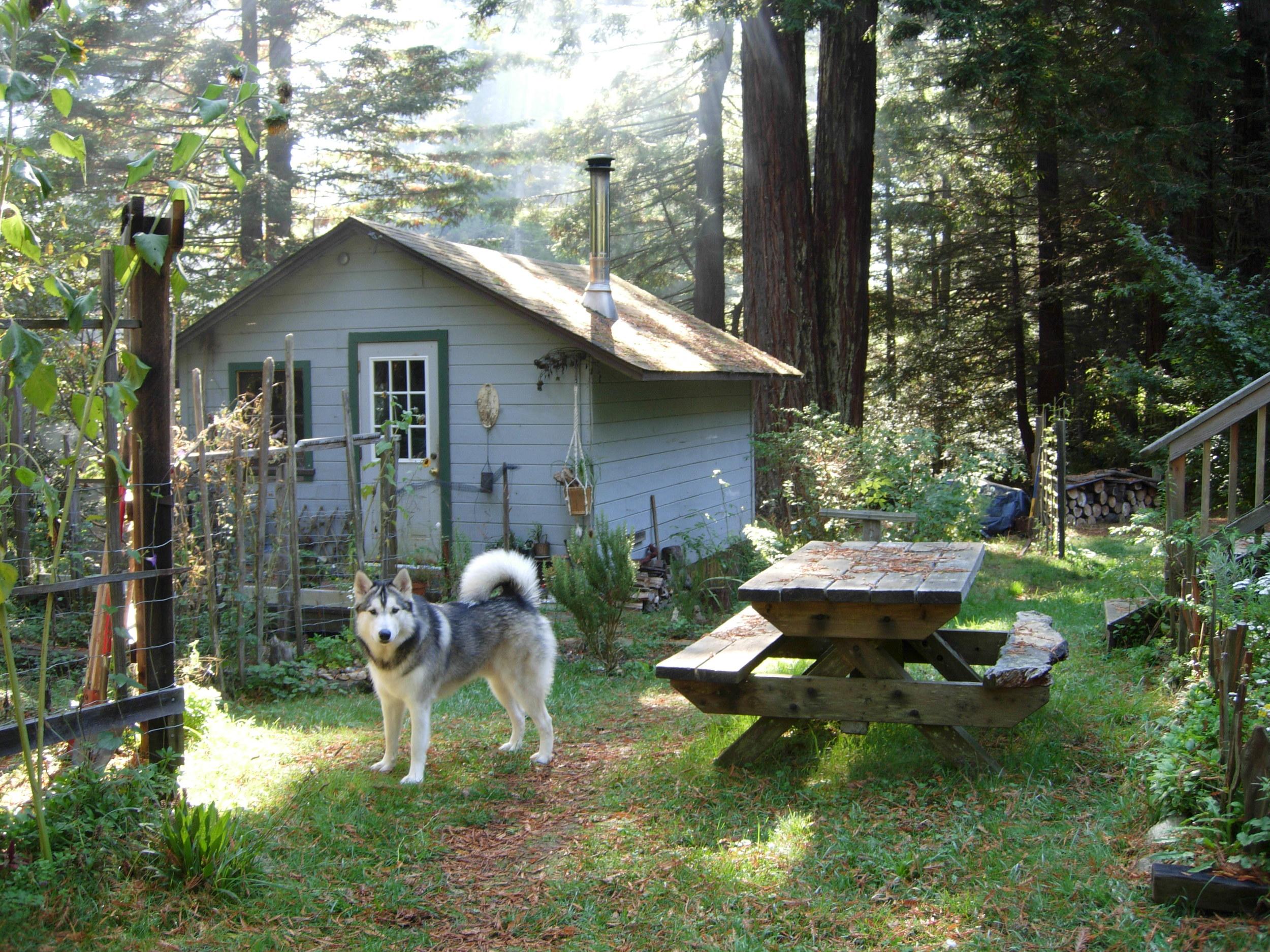 Buck - Humboldt County, CA