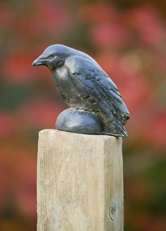 Small Raven