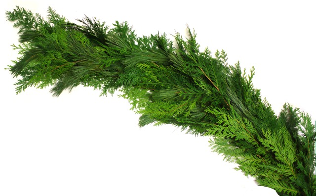 Pine & Cedar Mixed Garland - A mixture of Princess Pine and Western Red Cedar entwine to form a full and fragrant balanced garland. Approximately 25