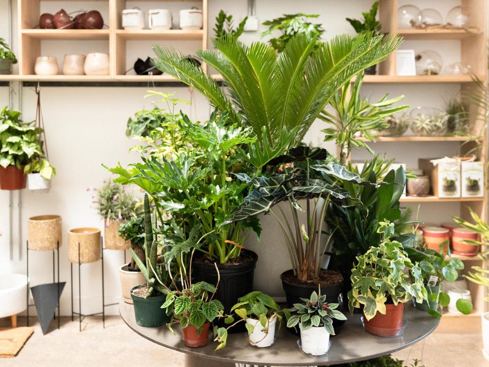 RiNo's Hottest Little Garden Shop ( 5280 Home)