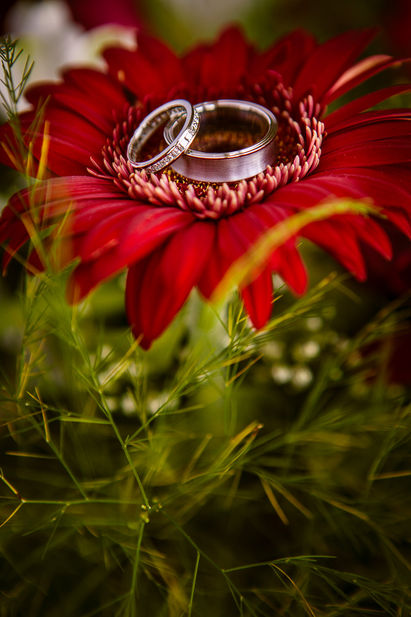 wedding-photographer-toronto-canada-shayne-gray_7831.jpg