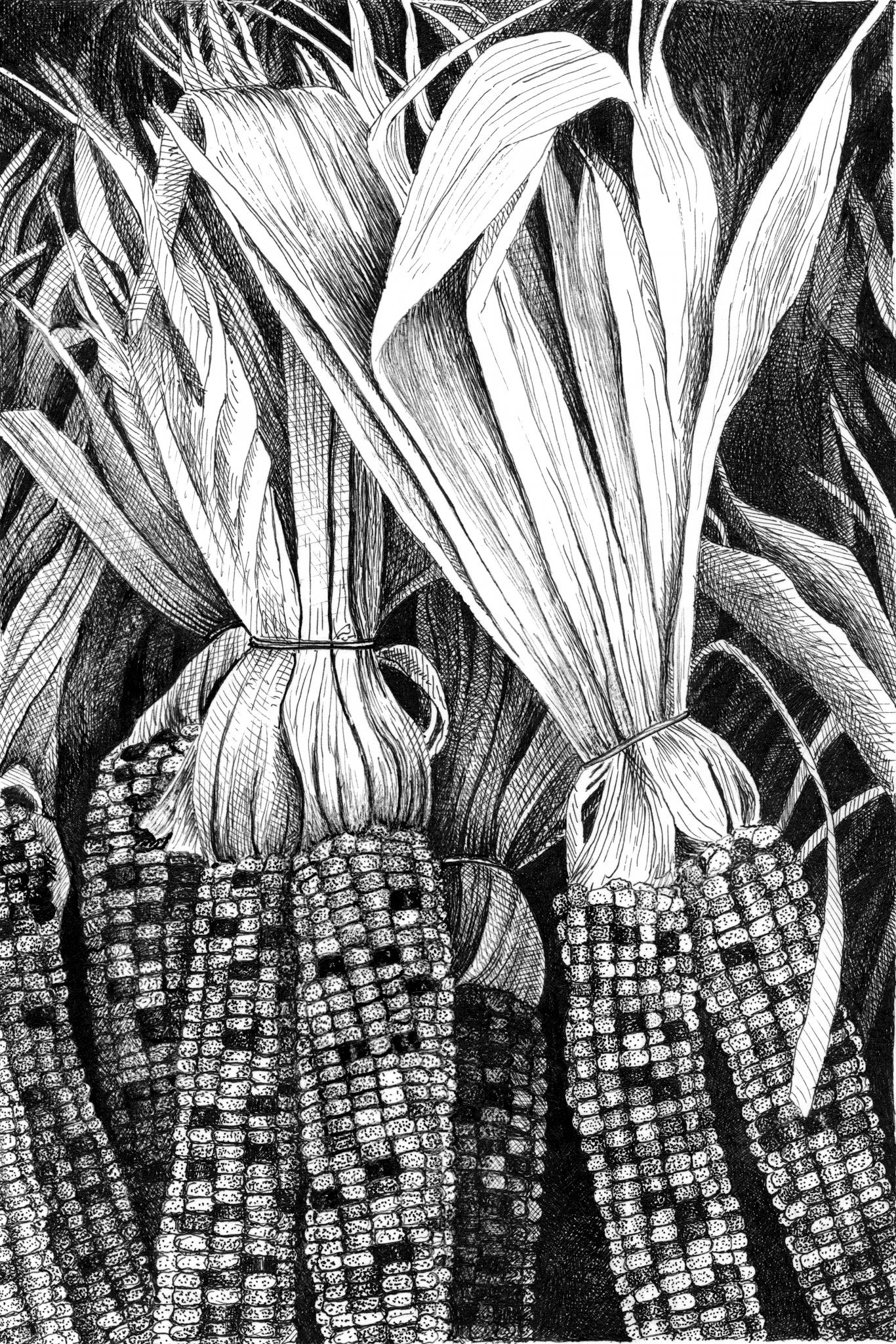 indian-corn.jpg