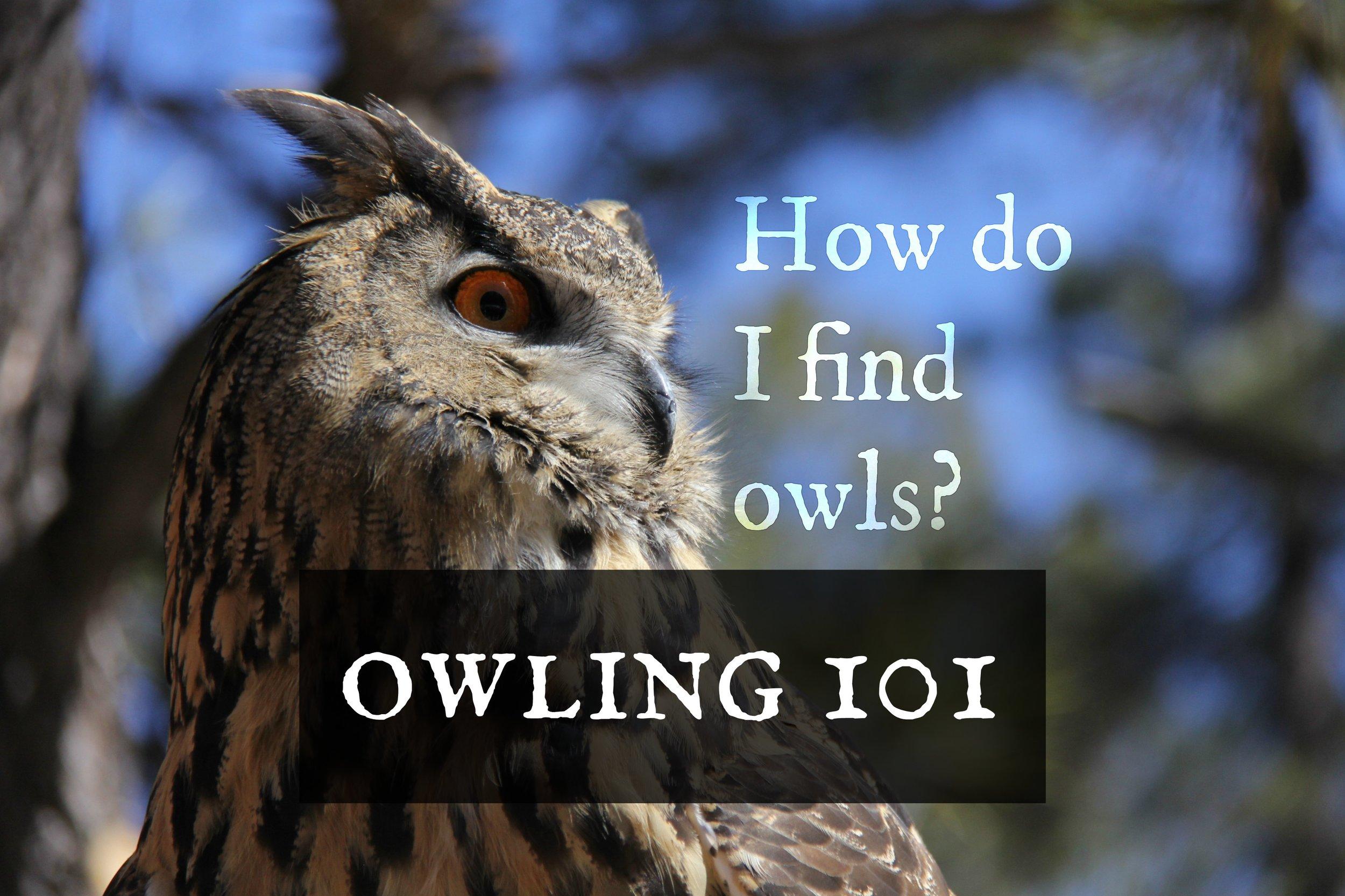 owling101-findingowls.jpg