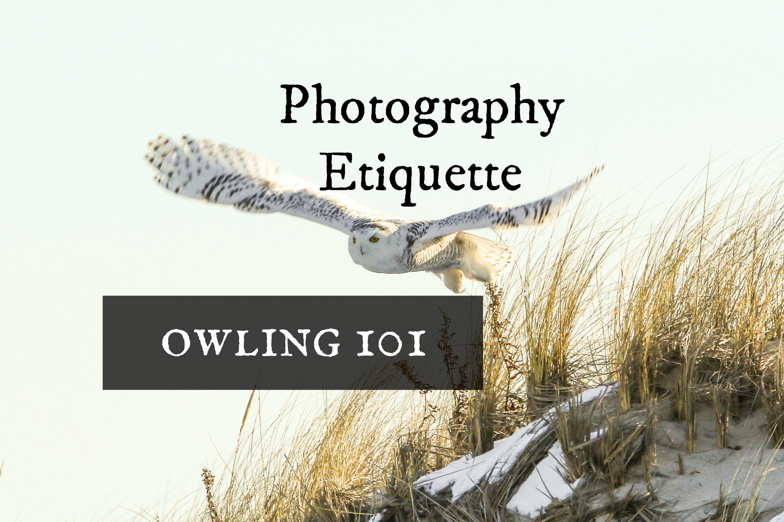owling101-paparazzi.jpg