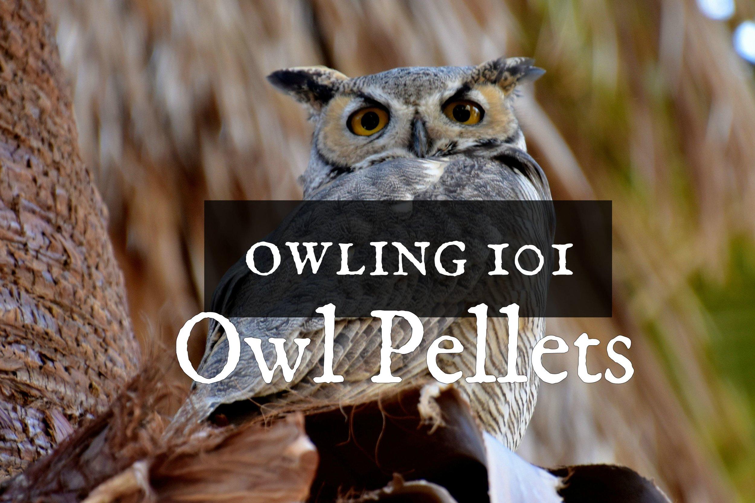 owling101pellets.jpg
