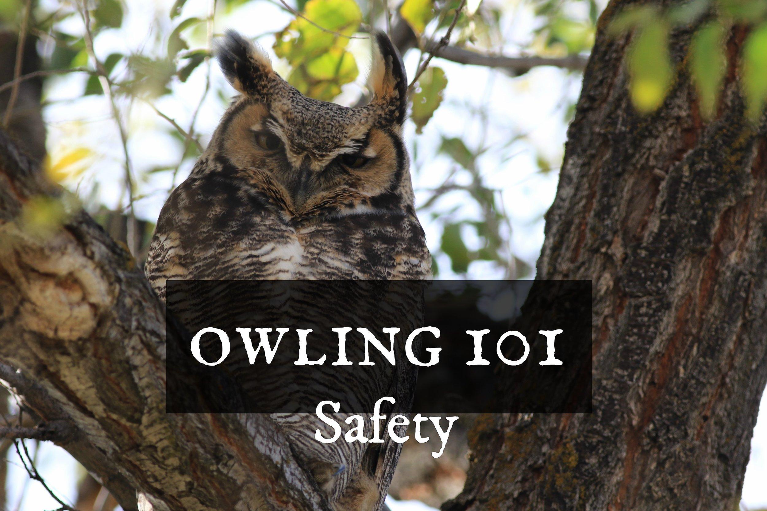 owling101-safety.jpg