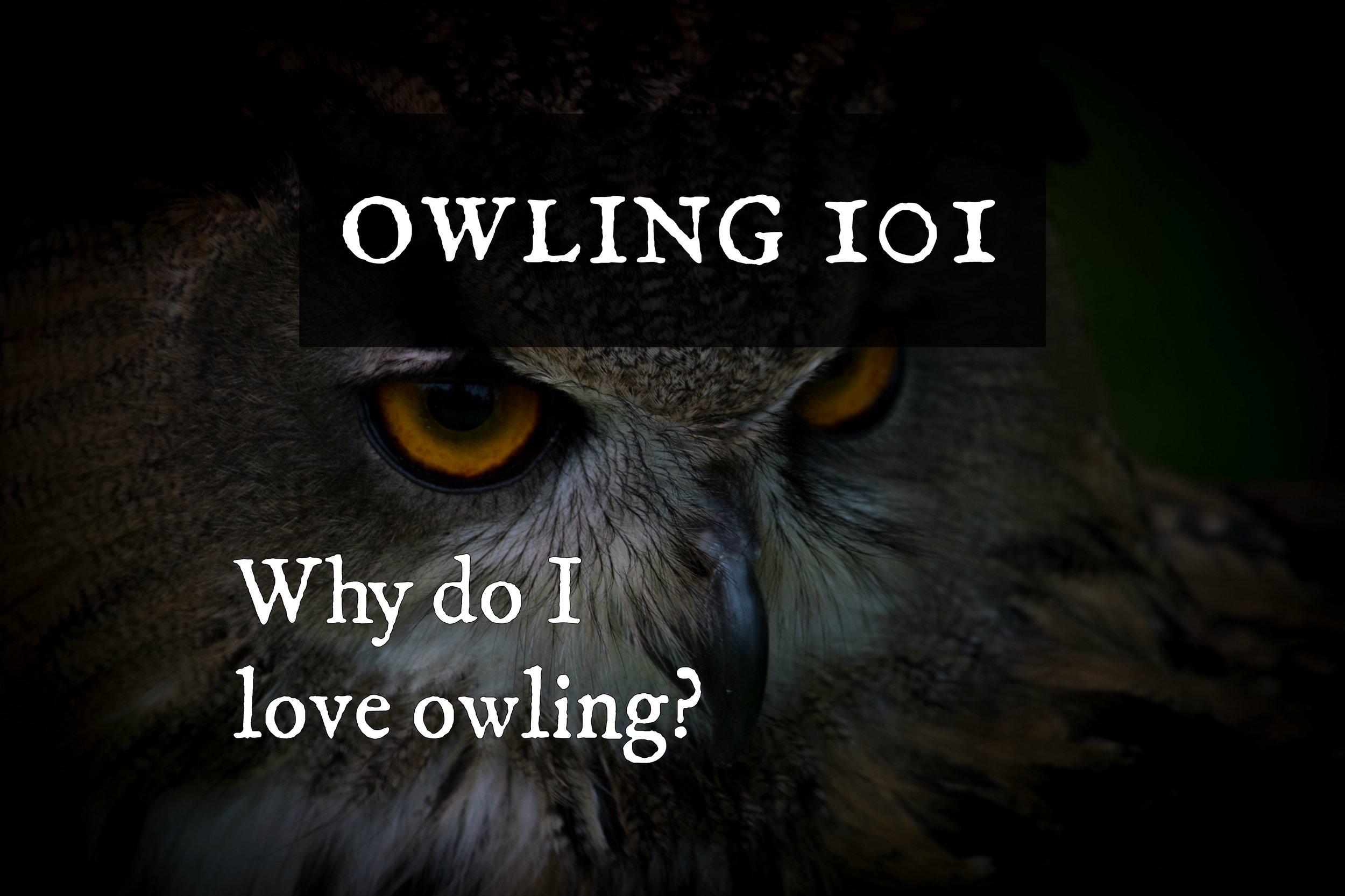 owling101-whydoiloveit.jpg