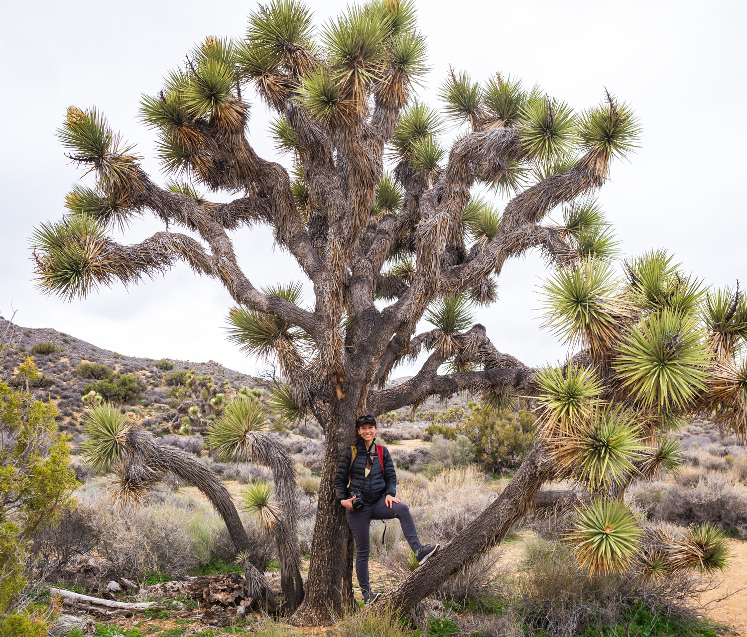 Joshua Tree National Park | CA