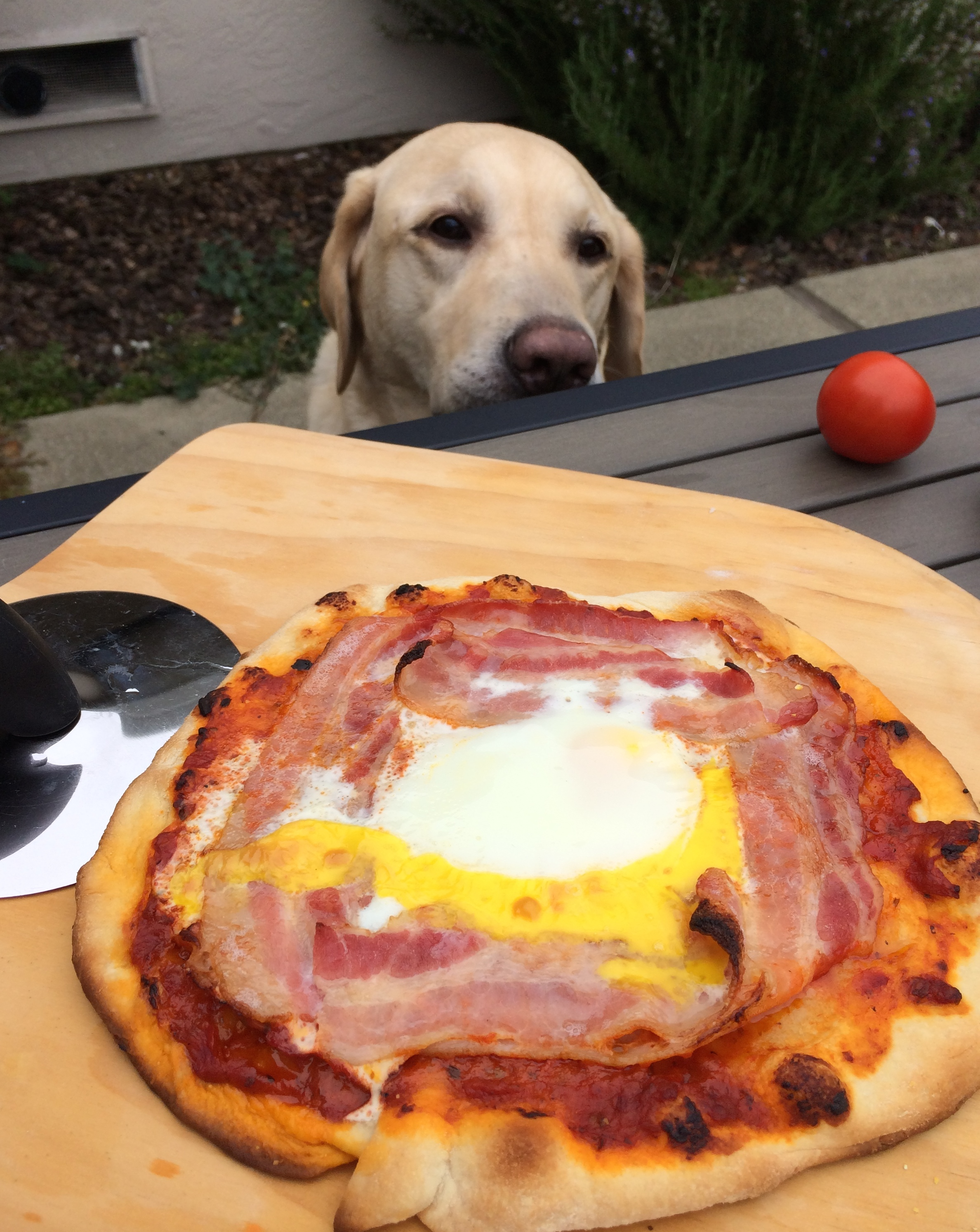 Breakfast Pizza and a hungry Gizmo
