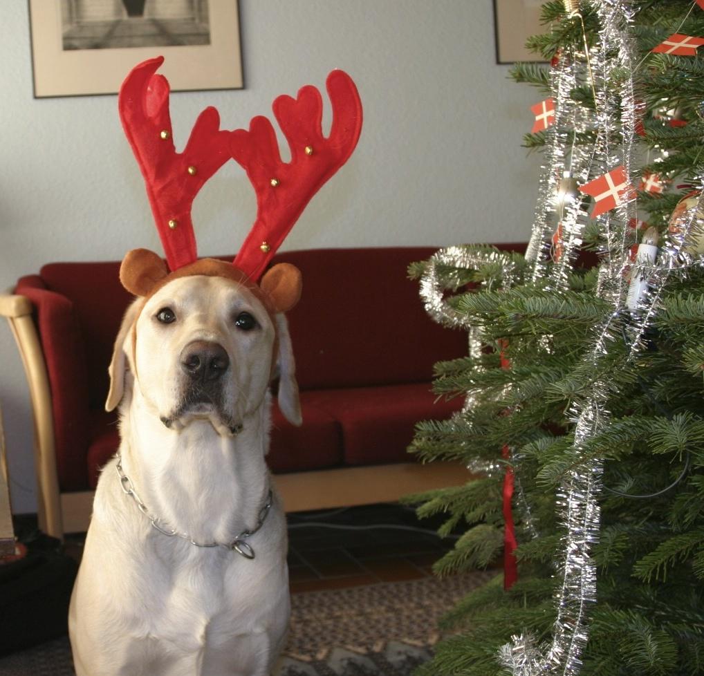 Gizmo the reindeer