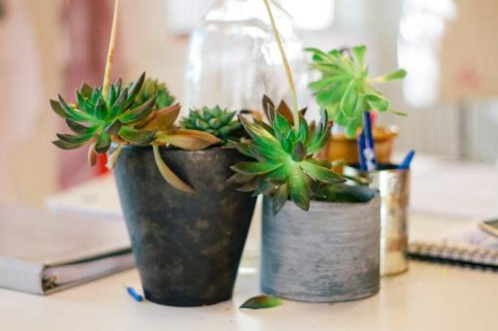 haley solar cactus desk.jpg