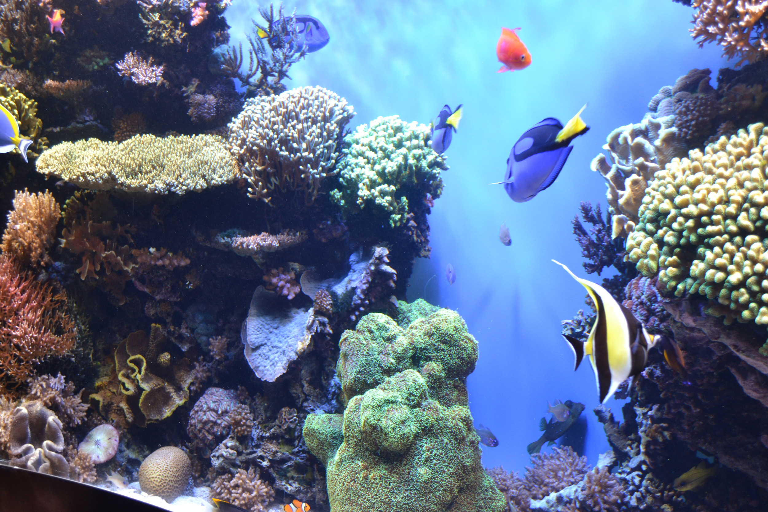 I think we found Nemo!