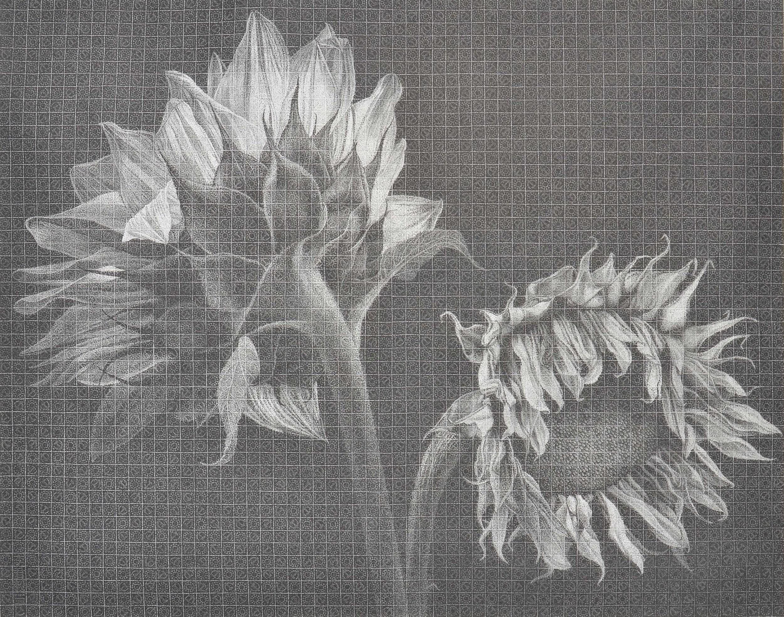 兩生花 Twin Flowers