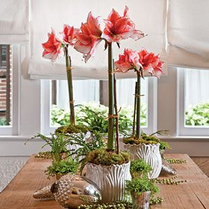 Amaryllis Tablescape (photo: Southern Living)