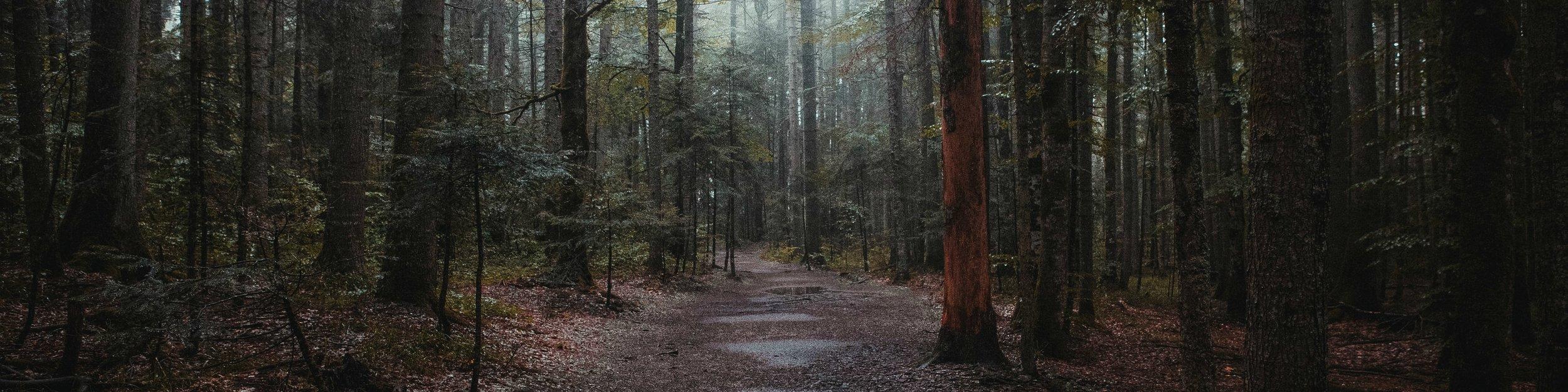 forest long-min.jpg