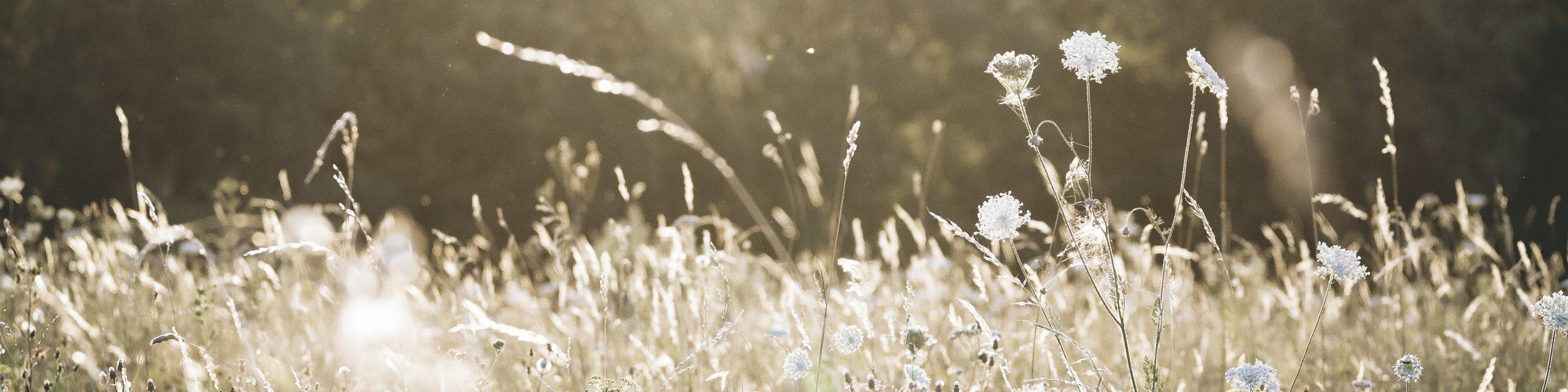 meadow long-min.jpg