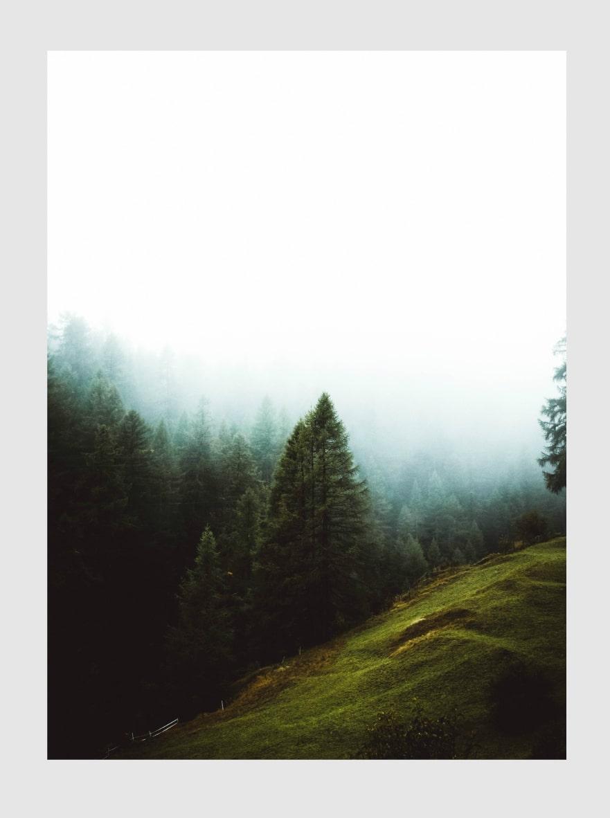 forestfog-min.jpg