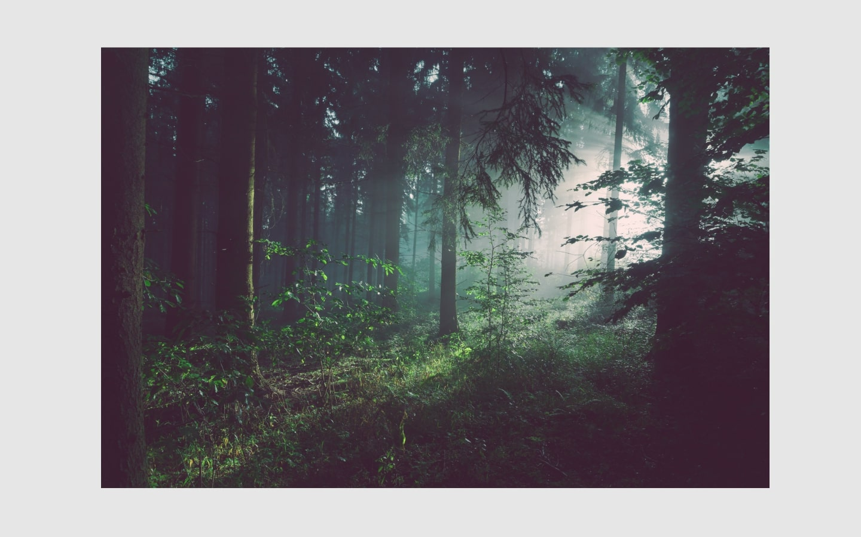 forest walk-min.jpg