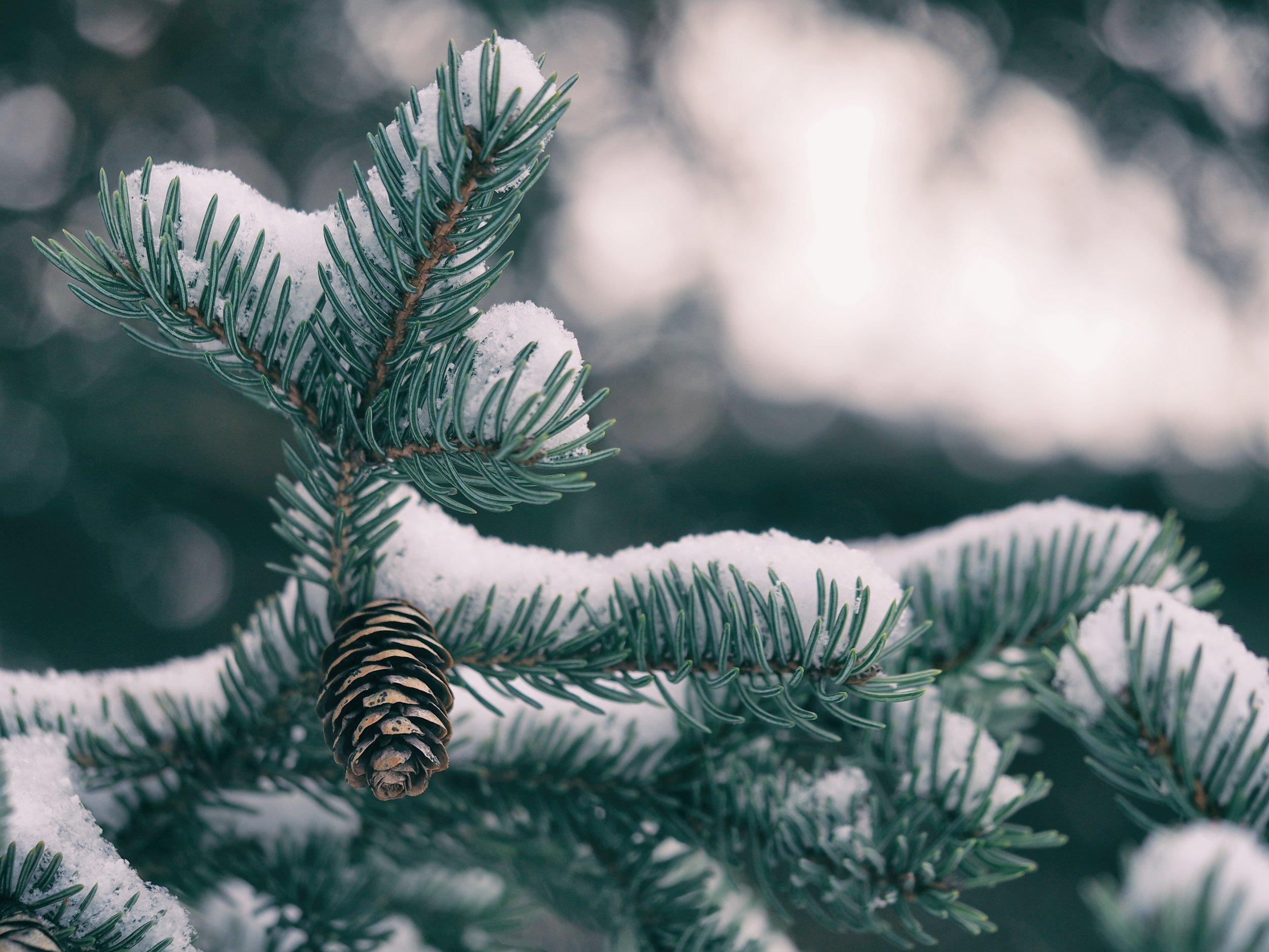Seasonal & Holidays -