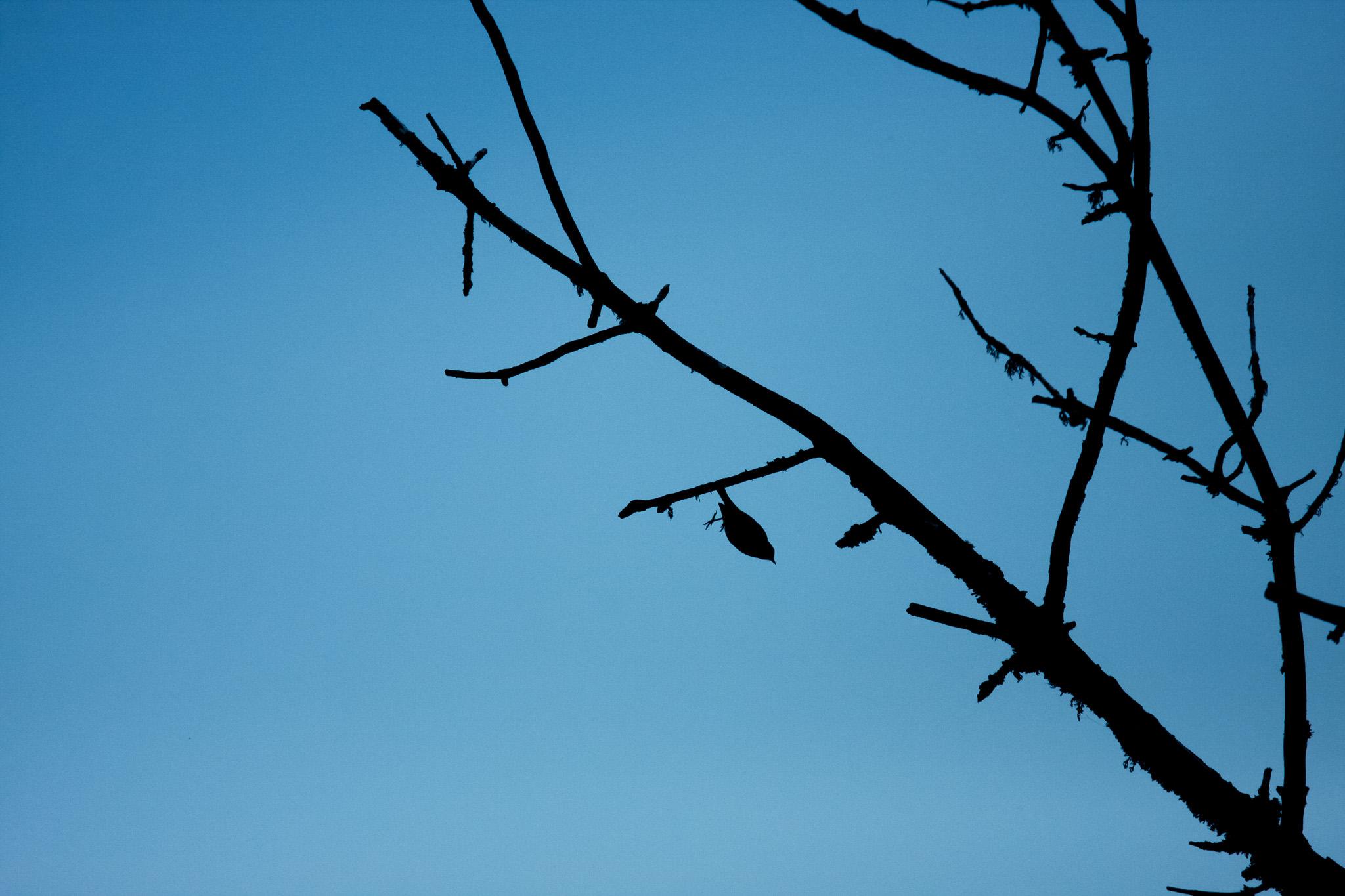 Taking Flight  Ridgefield Wildlife Refuge  #20110514_0412
