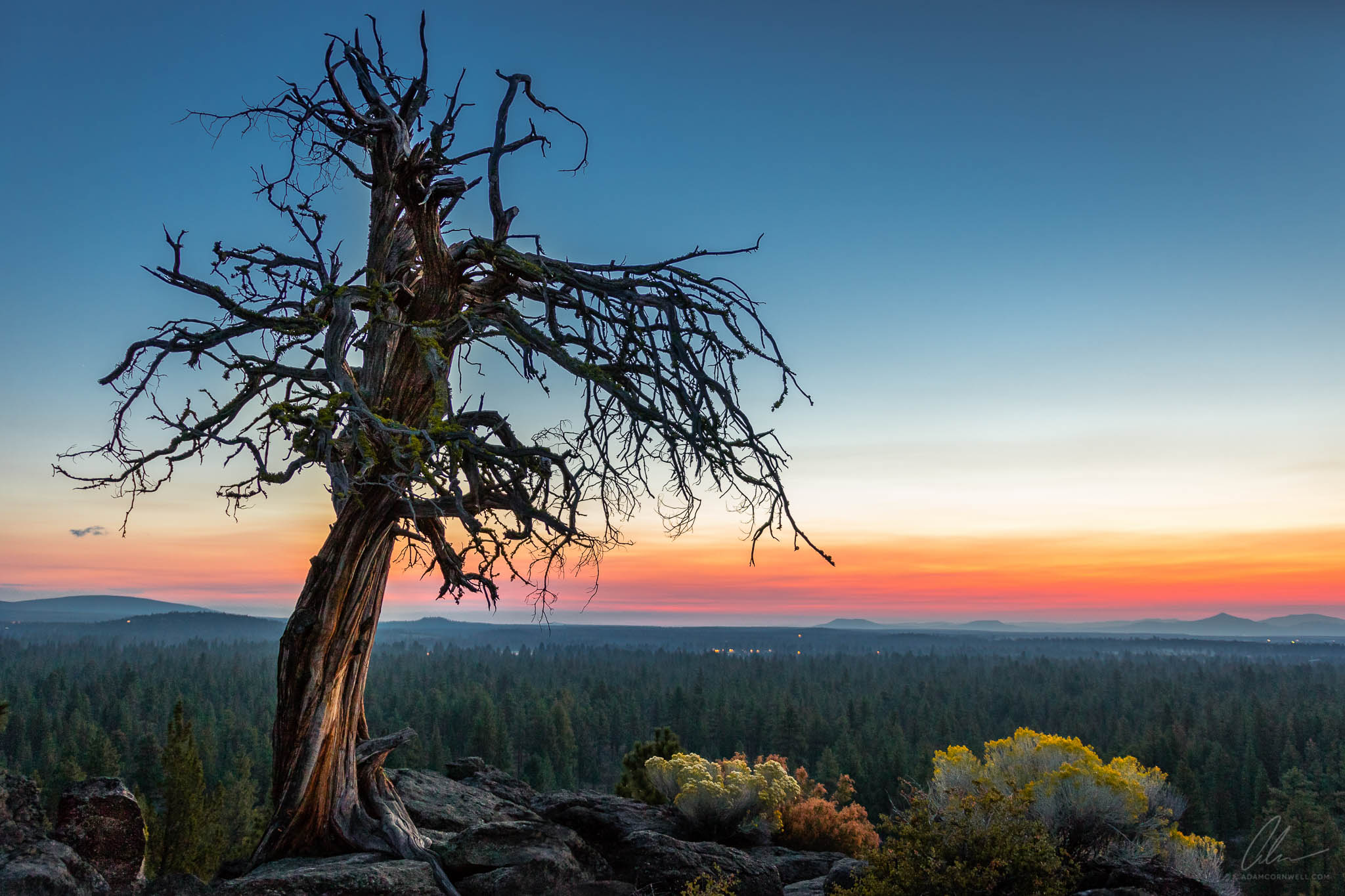 Gnarled Tree at Sunrise