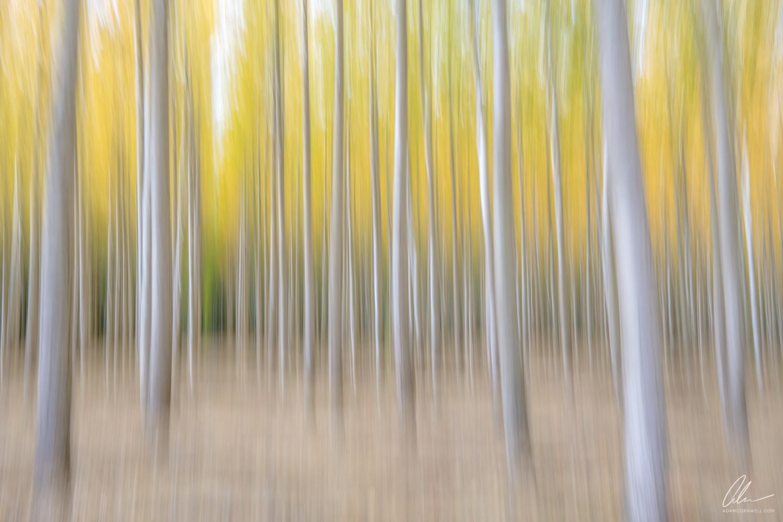 Poplar Forest I