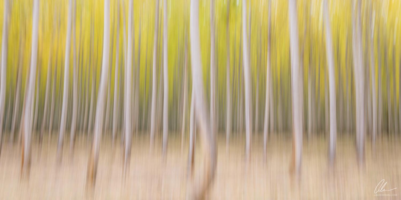 Poplar Forest II
