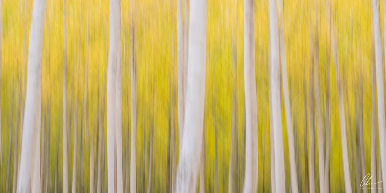 Poplar Forest V