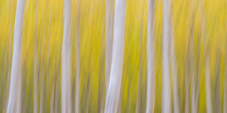 Poplar Forest IV