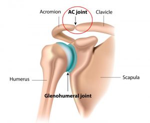 Acromioclavicular Joint (AC Joint)