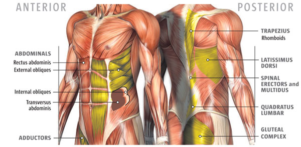Anterior and Posterior Core muscles