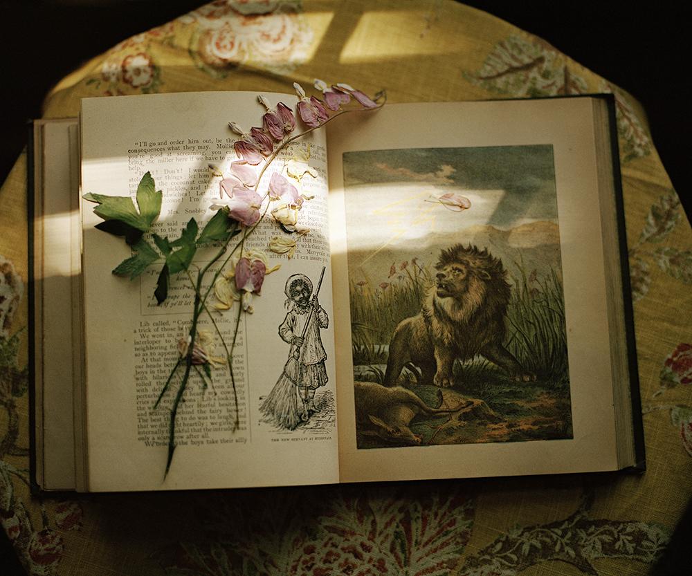 lion book pressed flower copy.jpg