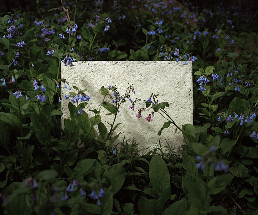 bluebell1 copy.jpg