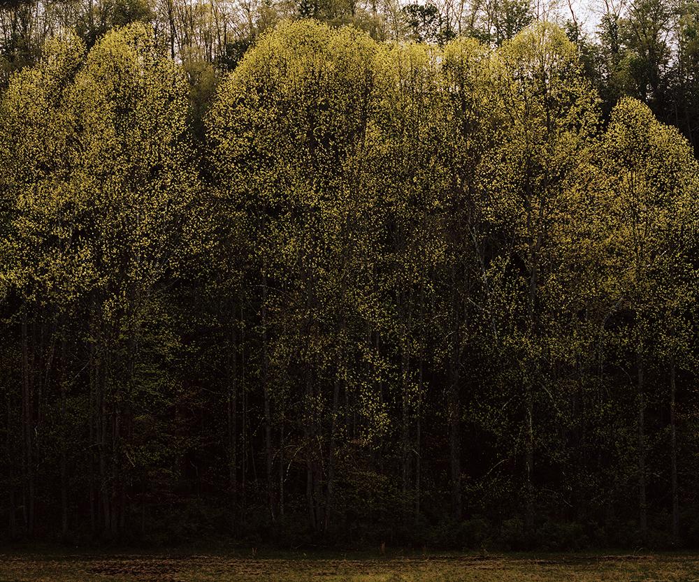 TreeLight copy.jpg