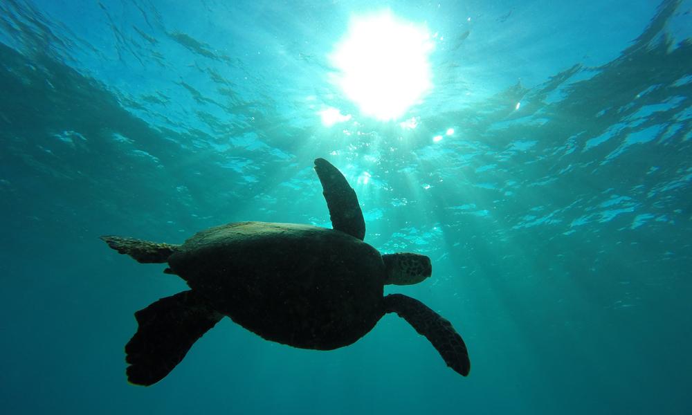 knekt-turtle.jpg