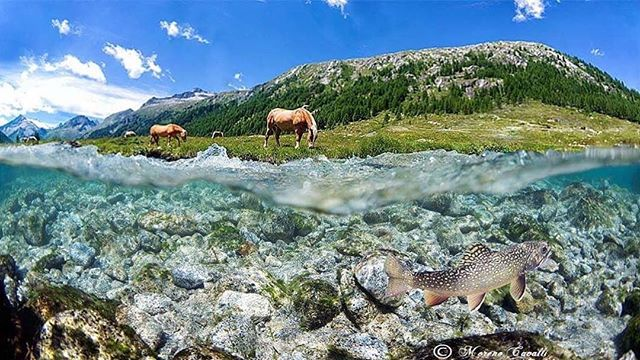 How good is this!!!!!???? . #Repost @moreno_cavalli ・・・ There are emotions that cannot be told, you have to live them.... Natural Park Adamello Brenta  Val di Fumo, Trentino, italy Altitude 1918 mt  @river_snorkeling @italy @mountain_stream_fishing_italia  @altoadigedascoprire  @italy.photos  @visittrentino #gopro7 #gopro7black #trentino #altoadige #parco #parcoadamellobrenta #goprohero7#knekt #knektusa