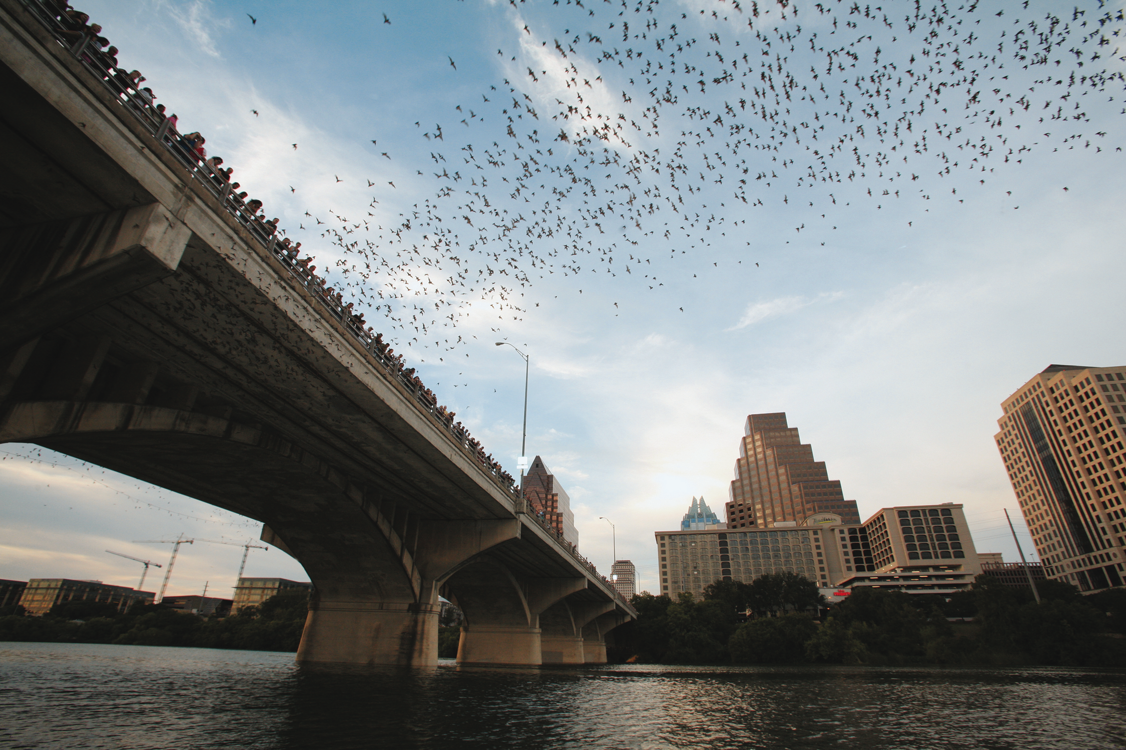 Congress-Avenue-Bridge-Austin-Texas-twilight-emergence-of-Mexican-Free-tailed-bats.png