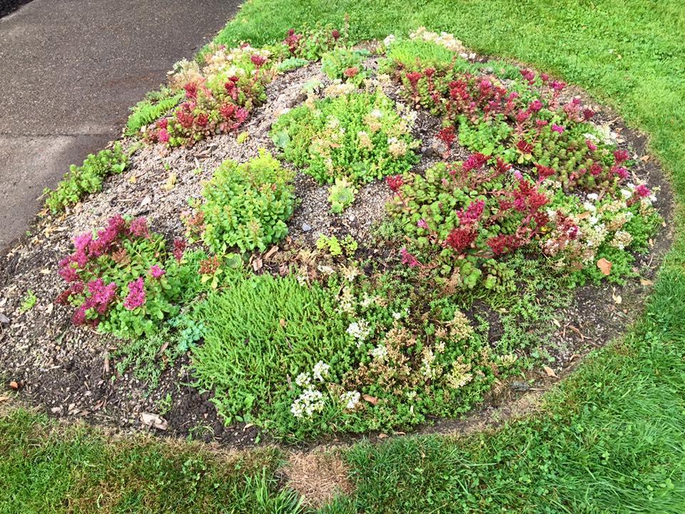 4 Bidwell mound.jpg