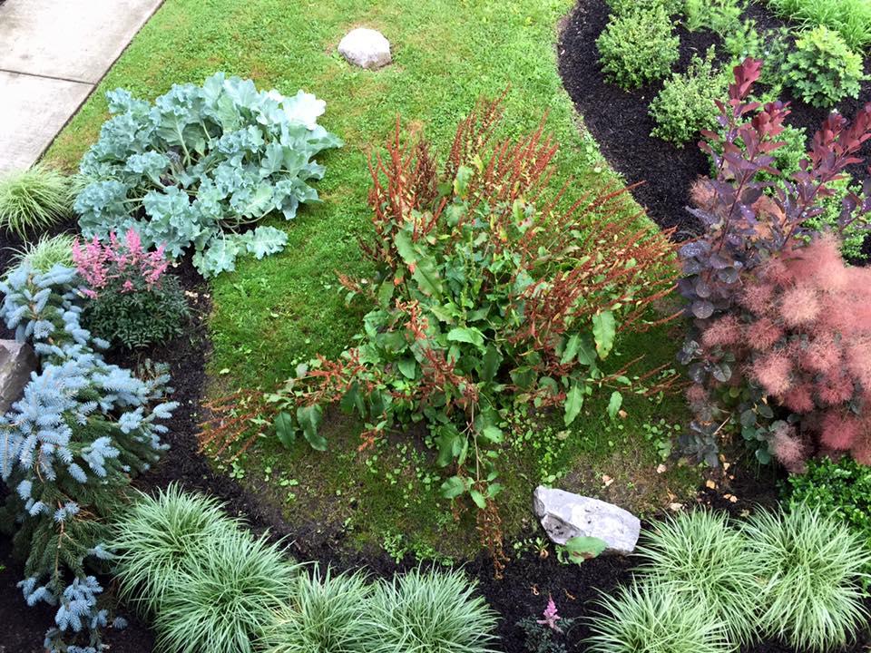 8 Bidwell garden navel plus.jpg