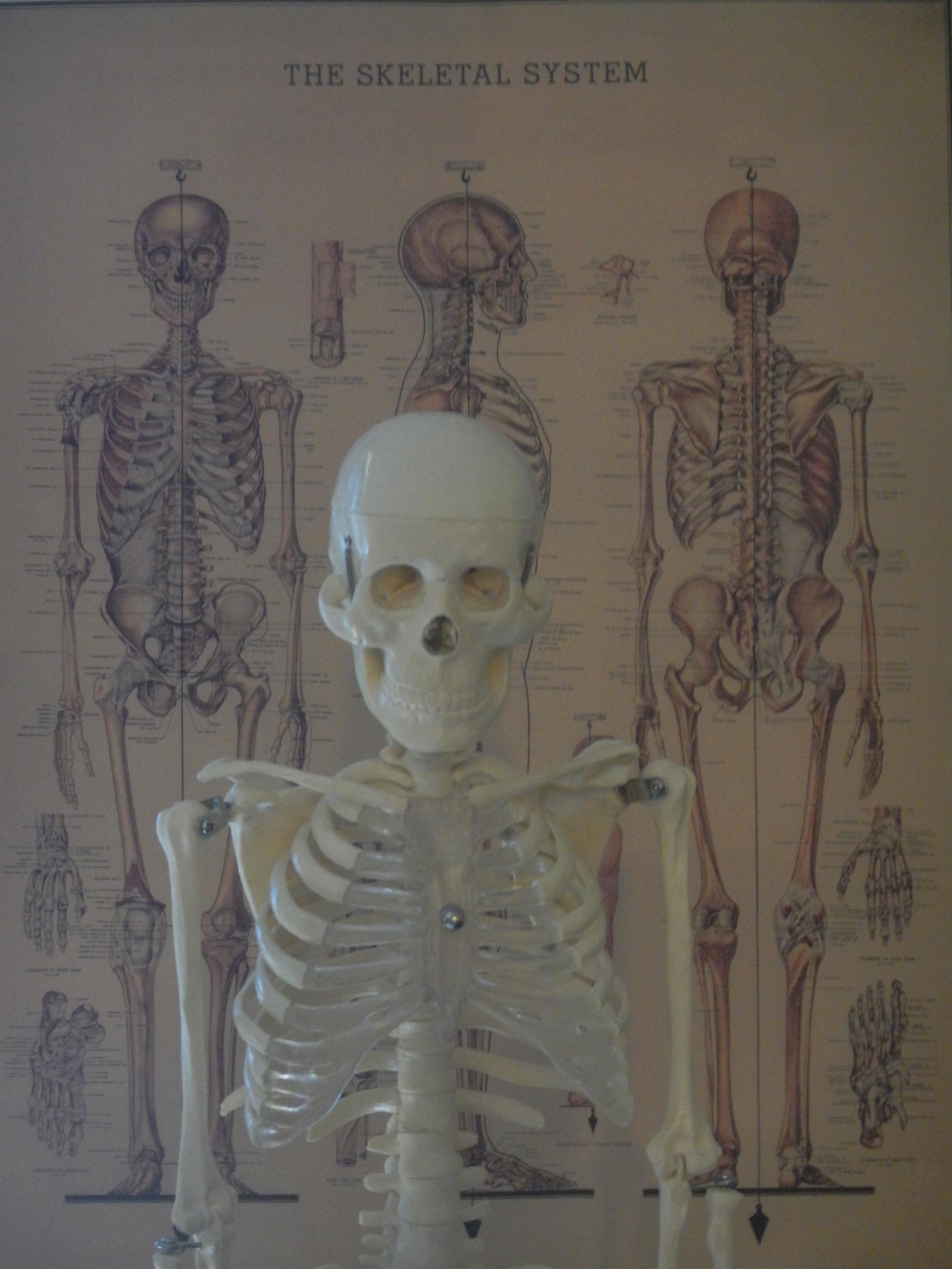 Anatomy - KINE 2031