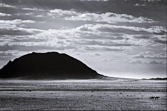 Desert Horses - Namibia