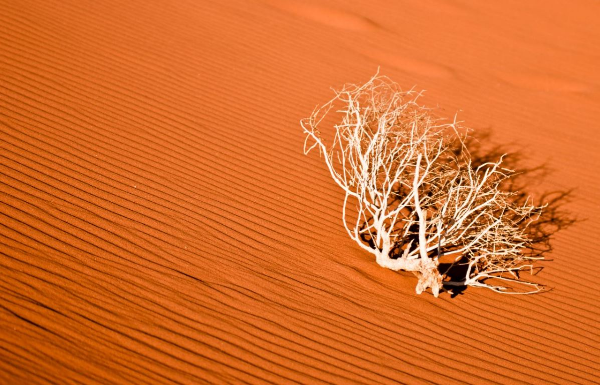 Dead shrub and patterns in the sand.