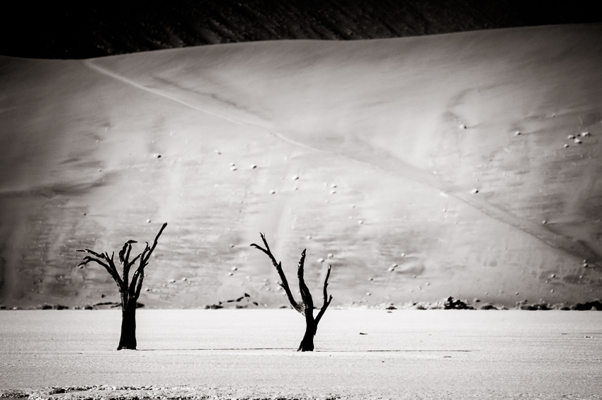 Two trees at Dead Vlei with giant sand dunes behind them.
